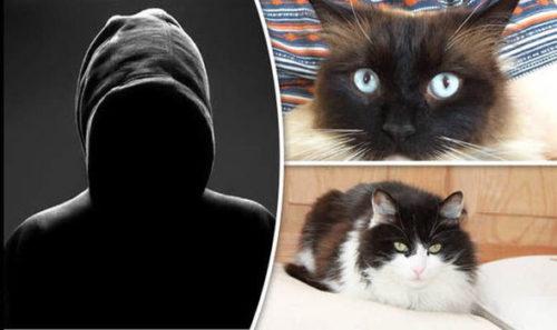 cats croydon